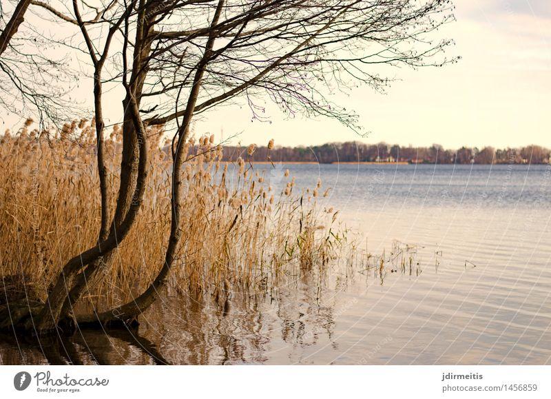 Seeblick Umwelt Natur Landschaft Wasser Herbst Baum Seeufer Freiheit Freizeit & Hobby Farbfoto Außenaufnahme Tag Panorama (Aussicht)