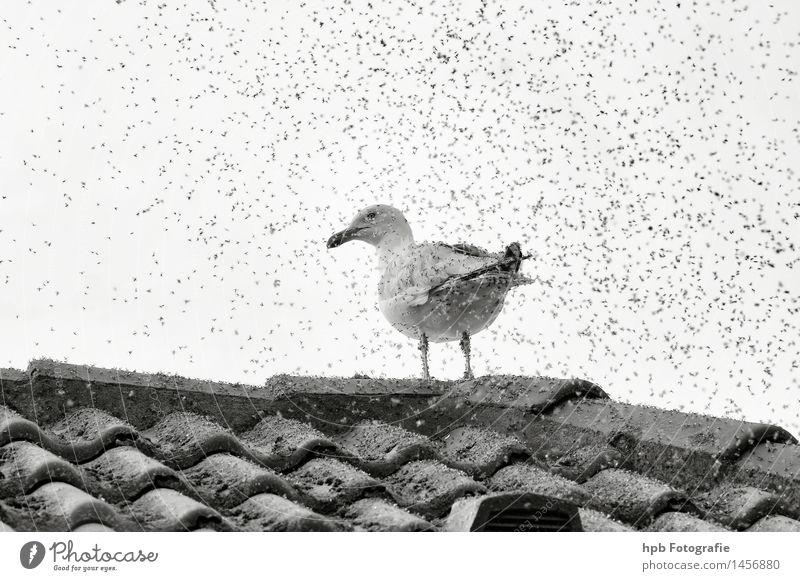 Möwe mit Anhang Natur Wolken Tier Bewegung lachen klein außergewöhnlich Vogel Luft Angst dreckig sitzen verrückt Flügel bedrohlich Krankheit