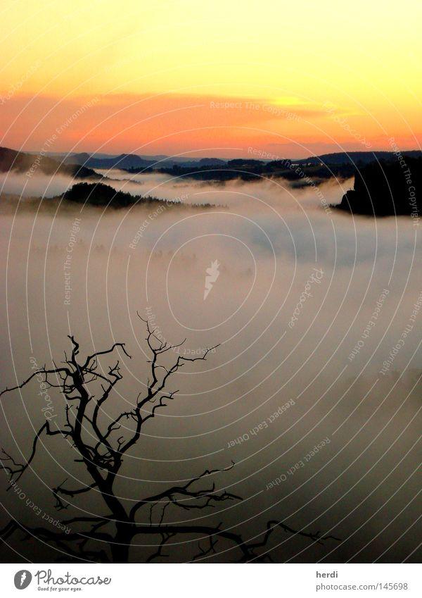 SommerNebel Wasser Himmel Baum Wolken Berge u. Gebirge Nebel Tal Sonnenuntergang