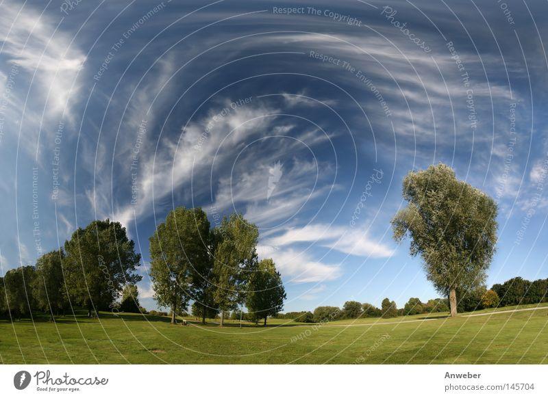 Landschaft - Wiese, Bäume & Zirruswolken Himmel Natur grün schön Baum Sommer Blatt Einsamkeit Wolken Ferne Gras Freiheit Horizont Park