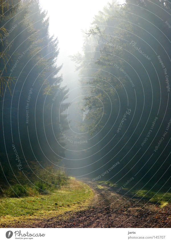 neuer Tag... Sonne Wald Herbst Wege & Pfade Nebel Ende Fußweg Erkenntnis Himmelskörper & Weltall