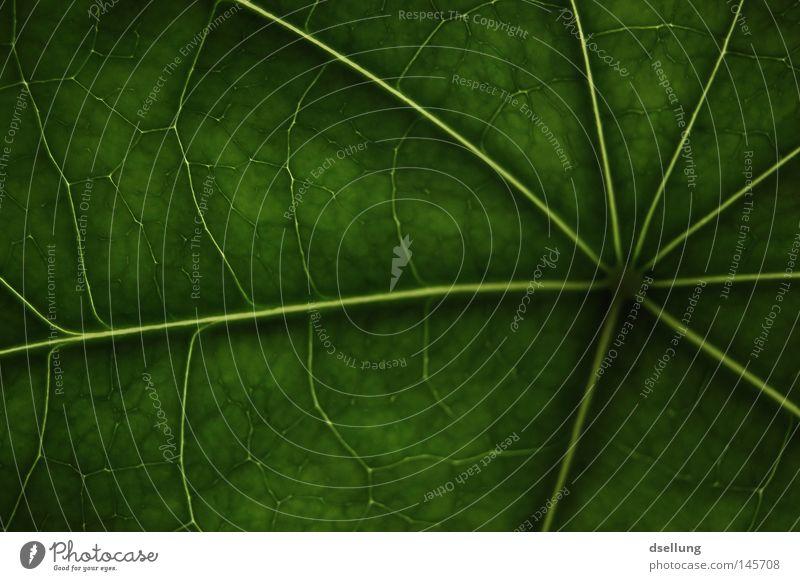grünes Blatt mit starken Strukturen Photosynthese glänzend Gefäße Hoffnung Saft ökologisch Muster dunkel Autobahn strahlenförmig Tunnel Goldener Schnitt modern