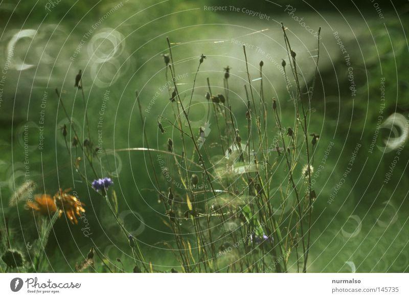 Guter Morgenblick Gartenbau Herbst Spinne Wassertropfen Tau Nebel Sonnenaufgang nass schön ästhetisch fantastisch wunderbar glänzend Reflexion & Spiegelung