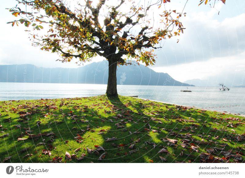 Herbst 3 Baum Blatt See Berge u. Gebirge Schweiz Vierwaldstätter See Farbe Platane Zweige u. Äste Baumstamm Jahreszeiten Licht gelb orange braun grün Seeufer