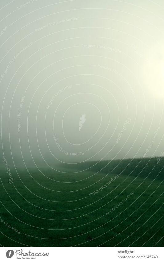 not much ruhig einfach Nebel Einsamkeit Herbst Morgen grün Feld Wiese wenige Sonne Mais