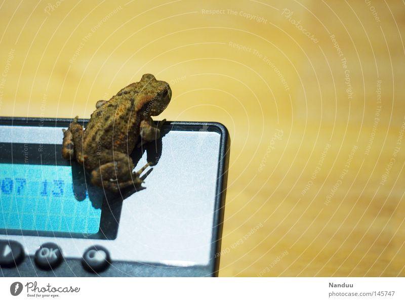 Ausblick Telefon Tier Frosch sitzen Lurch Ecke Quaken Erdkröte Farbfoto Textfreiraum rechts Textfreiraum oben Ganzkörperaufnahme Anzeige außergewöhnlich