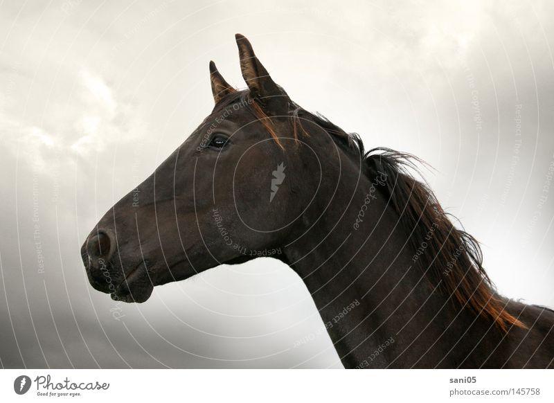 Aufbruch Pferd schwarz Wolken dunkel Säugetier junges Pferd Himmel Freiheit Weide Jungpferd Gewitter Rappe