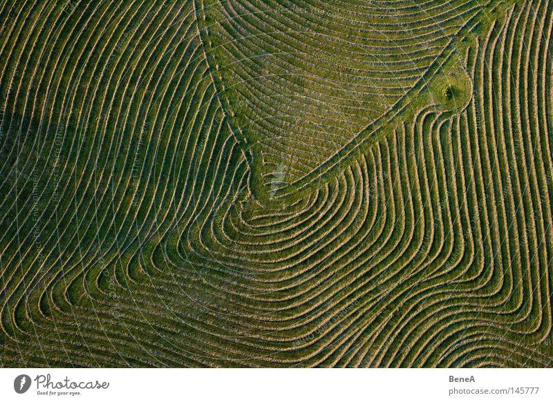 Feldarbeit Natur grün Landschaft Wiese Gras Luftaufnahme Linie Vogelperspektive Arbeit & Erwerbstätigkeit Kreis rund Landwirtschaft Ring drehen Ackerbau