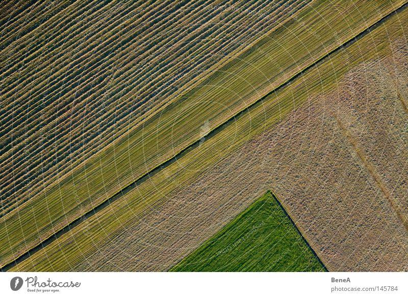 Feld Natur grün rot Landschaft Wiese Gras Linie Arbeit & Erwerbstätigkeit Lebensmittel Landwirtschaft Neigung diagonal drehen Ackerbau Wirtschaft