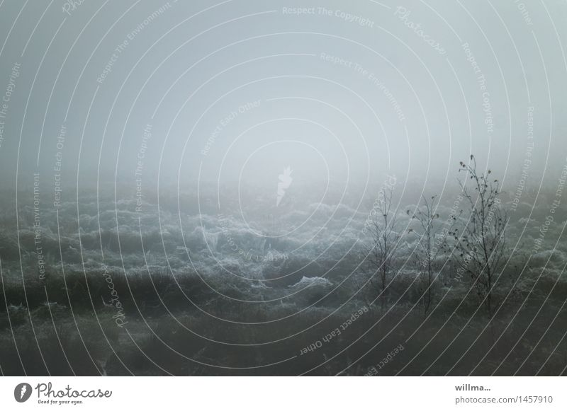 wolkenmoor in natura   helgiland II Landschaft grau außergewöhnlich Nebel gruselig Tau seltsam trüb Sumpf Spinnennetz Moor Naturschutzgebiet Naturphänomene