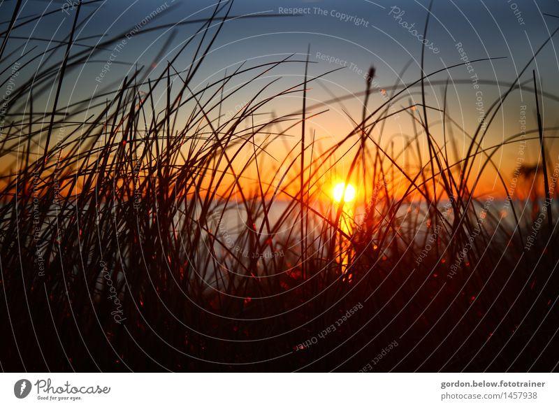 Abendstimmung Natur Landschaft Wasser Himmel Wolkenloser Himmel Horizont Sonne Sonnenaufgang Sonnenuntergang Sommer Gras Wildpflanze Seeufer Nordsee