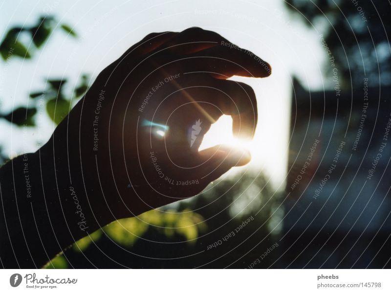 ich hab den sommer in der hand... Hand Himmel weiß Sonne Pflanze Sommer Ferien & Urlaub & Reisen Wärme hell Beleuchtung Physik