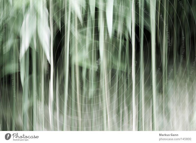 Verzerrt grün Blatt Wald Linie Kunst Sträucher abstrakt Vergänglichkeit Verzerrung wahrnehmen Schwindelgefühl Unterholz