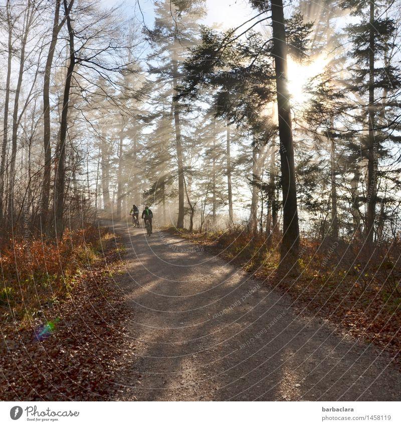 Mit dem Radl unterwegs Fahrradfahren 2 Mensch Umwelt Natur Landschaft Himmel Sonnenlicht Klima Schönes Wetter Wald Wege & Pfade leuchten Stimmung Freude