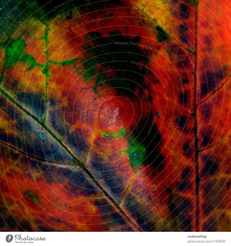 are you ready for the country? Blatt Herbst Herbstfärbung Laubbaum grün Natur rot September Oktober gold leaf deciduous structure Strukturen & Formen autumn