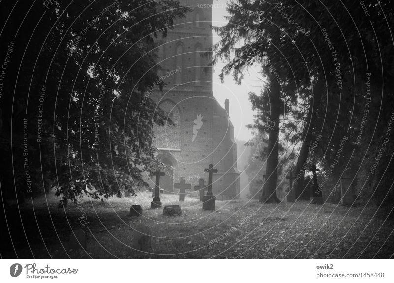 Elegie Pflanze Baum Landschaft ruhig dunkel Gras Gebäude Tod Nebel Idylle stehen Kirche einfach Vergänglichkeit Schönes Wetter Zeichen