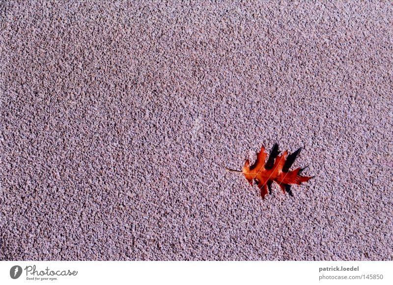 [HH08.3] Blattfang schön rot Einsamkeit Herbst Tod grau klein leer ästhetisch Platz Asphalt Oktober Ahorn minimalistisch September