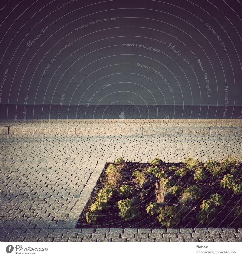 Öde Ilmenau parallel pflastern Beton gefangen Wand Hintergrundbild Blumenbeet Beet Pflanze Erde leer grau Einsamkeit Dekoration & Verzierung Gebäude Langeweile