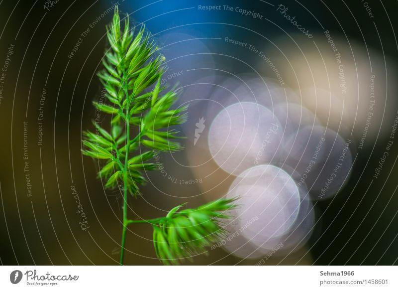 Gras im Frühjahr mit Wasserreflexionen Natur Landschaft Pflanze Tier Sonne Frühling Sommer Schönes Wetter Blume Sträucher Wiese Flussufer Bach berühren
