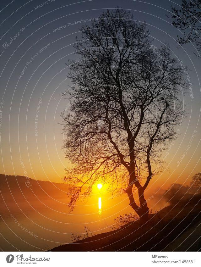 ...der quälende weg zur arbeit... Umwelt Natur Landschaft Sonne Sonnenaufgang Sonnenuntergang Sonnenlicht Schönes Wetter Nebel Baum dünn hell Elbe Fluss
