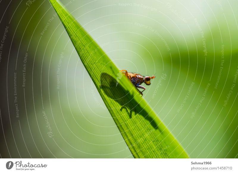 Insekt auf einem Blatt guckt neugierig in die Umgebung Natur Pflanze grün Sommer Sonne Landschaft Tier Gefühle Wiese Gras Freiheit braun Zufriedenheit
