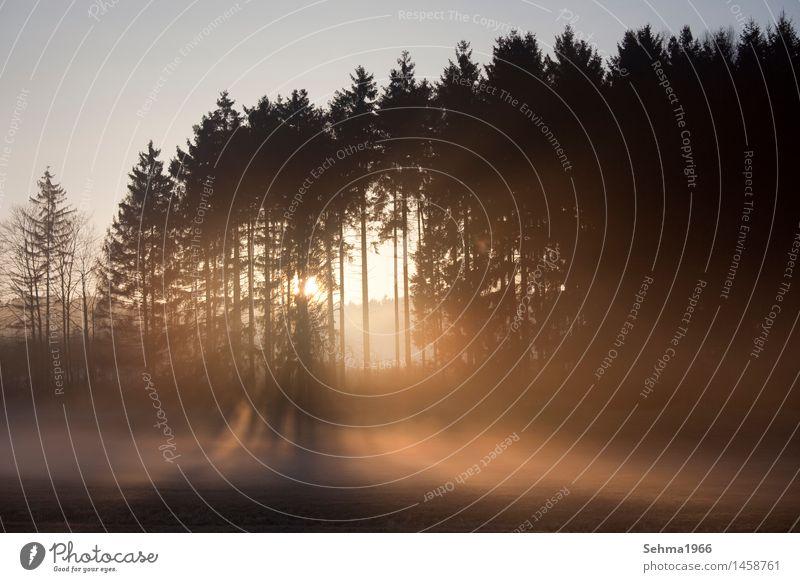 Sonnenaufgang in herbstlicher Landschaft mit abziehenden Nebel Natur Pflanze Wolkenloser Himmel Sonnenuntergang Sonnenlicht Frühling Wetter Schönes Wetter Baum