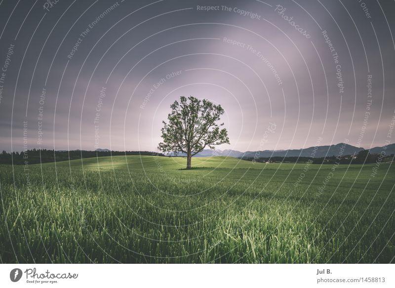 Alleine auf der großen Wiese Umwelt Natur Landschaft Sommer Baum Blatt alt Gefühle Stimmung Tugend Reinheit Eifersucht Farbfoto Außenaufnahme Tag Licht Schatten