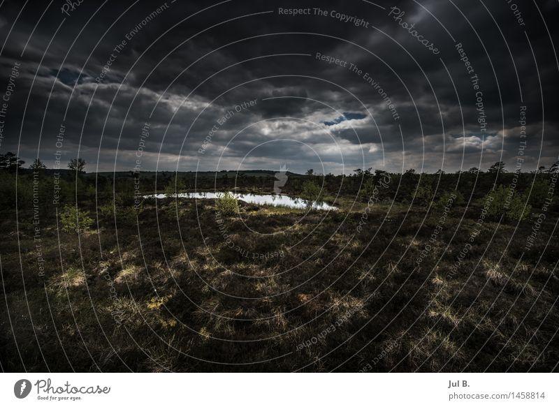 Finsteres Moor Umwelt Natur Moos Sumpf dunkel Stimmung Schüchternheit Respekt Farbfoto Außenaufnahme Tag Licht Kontrast Reflexion & Spiegelung