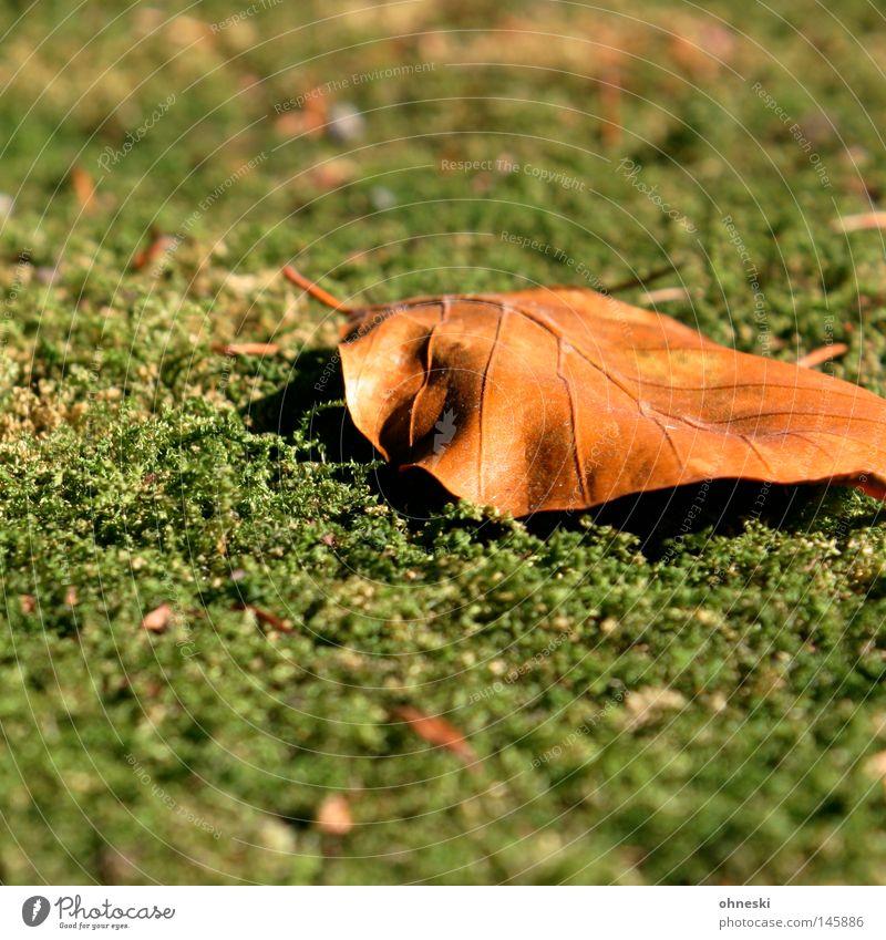 Blatt auf Moos grün Herbst braun Spaziergang Vergänglichkeit Jahreszeiten gefallen September