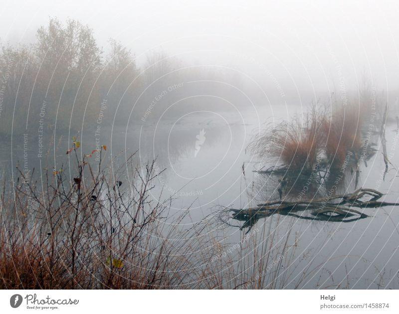 Nebel im Moor... Umwelt Natur Landschaft Pflanze Wasser Herbst Gras Sträucher Wildpflanze Ast Sumpf Moorsee stehen dehydrieren Wachstum ästhetisch authentisch
