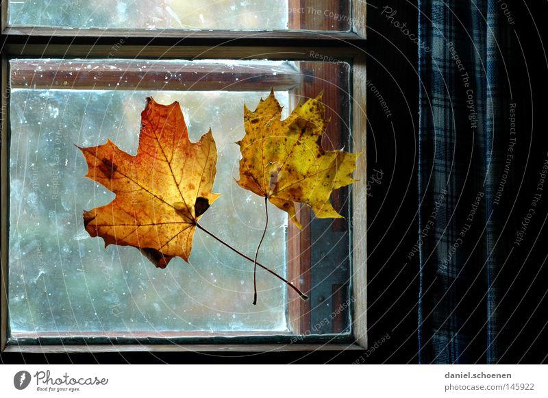 Herbst 5 Blatt Farbe Fenster Dekoration & Verzierung Häusliches Leben Jahreszeiten Wohnzimmer Fensterscheibe