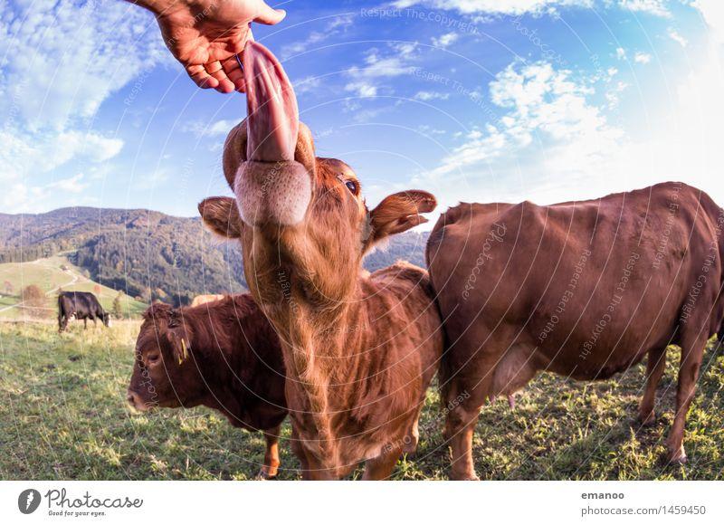 tongue catcher Natur Ferien & Urlaub & Reisen Hand Landschaft Tier Freude Berge u. Gebirge Gras lustig Feld wandern berühren Neugier Hügel Landwirtschaft Alpen