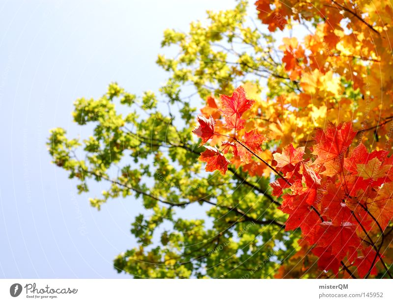 What A Beautiful Day - Herbsttag Blatt Baum Natur rein schön ästhetisch mehrfarbig blau Himmel Schönes Wetter Wind Blätterdach grün Blattgrün Ende Jahreszeiten