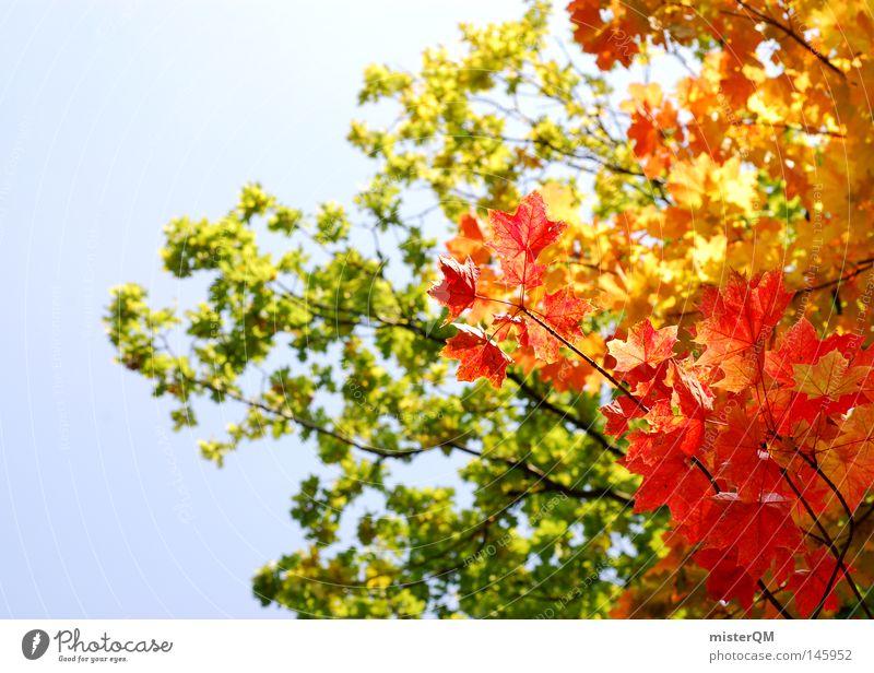 What A Beautiful Day - Herbsttag Himmel Natur blau grün schön Baum rot Farbe Blatt gelb Tod Farbstoff Wind authentisch ästhetisch