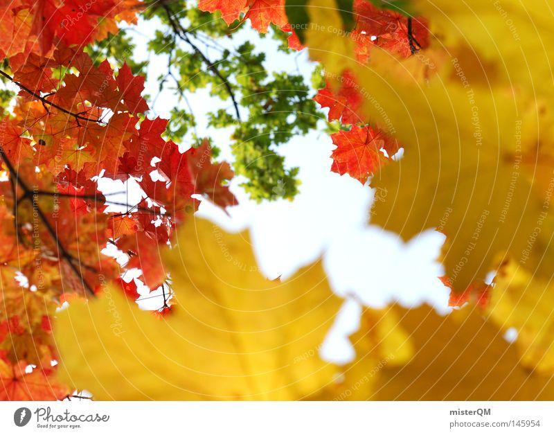 Verlauf des Lebens - Herbsttag Blatt Natur rein schön ästhetisch mehrfarbig blau Himmel Schönes Wetter Wind Blätterdach grün Blattgrün Ende Jahreszeiten rot
