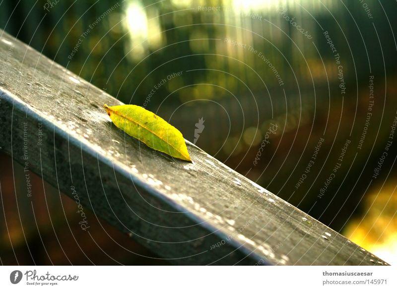 Herbstanzeichen Baum Blatt grün gelb Physik frisch Kraft Sommer sprießen Wachstum Erholung ruhig Gelassenheit Zufriedenheit Fluss Bach Wärme Erfinden Natur