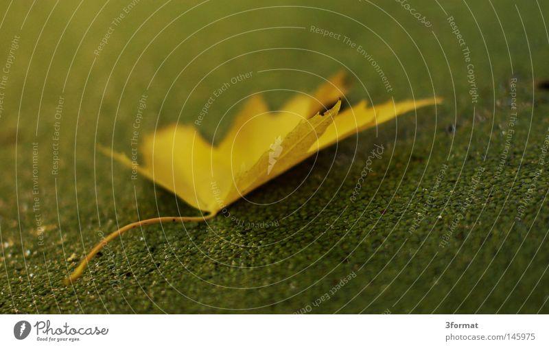Herbsttag Wasserlinsen Algen Pflanze Sturz fallen leer Erwartung Einsamkeit Langeweile Ferne ruhig Tau Sonnenaufgang Morgen weich grün Park Grünfläche