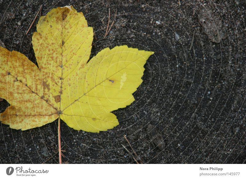 unterwegs... Natur schön Blatt gelb Herbst grau Linie Erde natürlich Ausflug Hoffnung Vergänglichkeit Glaube Jahreszeiten Symmetrie Gegenteil