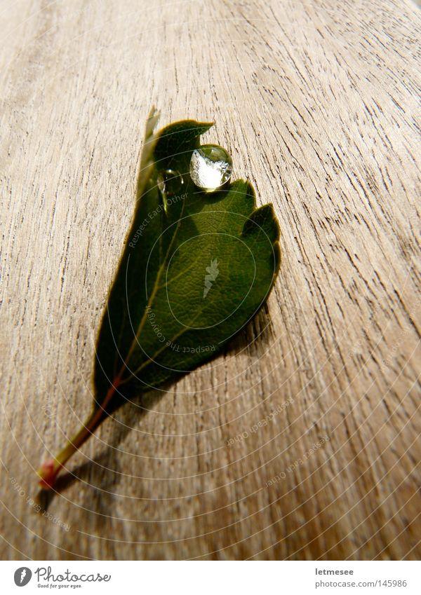 Der Herbst im September Blatt Holz Tisch Wassertropfen Gefäße Holzstruktur Maserung grün Lupe Regen Tau Brennglas frühherbst
