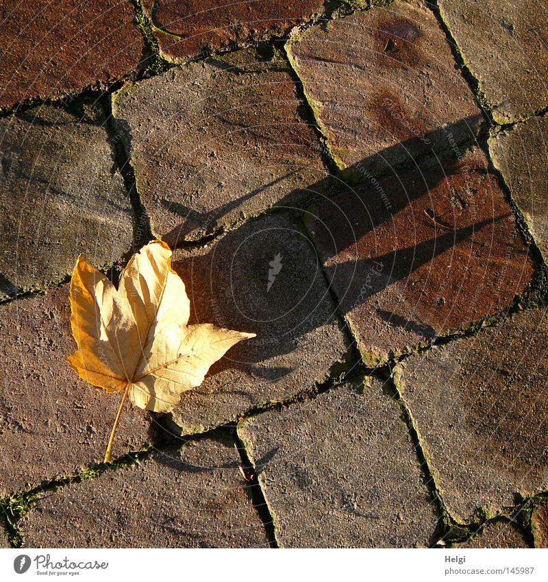 Abendblatt.... Baum Blatt gelb Farbe dunkel Herbst Stein Park Linie hell braun Spaziergang liegen fallen Vergänglichkeit Spitze