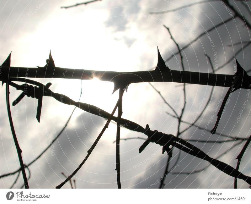 Dornen und Stacheldraht Barriere Sperrzone Licht Wolken historisch Sonne