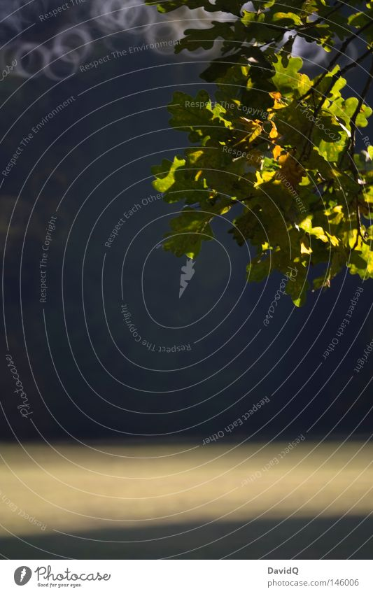 Eiche Baum Blatt Herbst Kreis Geäst Oktober Laubbaum Zweige u. Äste Lichtfleck Herbstbeginn Lichtkreis Spiegellinsenobjektiv (Effekt)