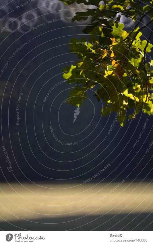 Eiche Baum Blatt Herbst Kreis Geäst Oktober Eiche Laubbaum Zweige u. Äste Lichtfleck Herbstbeginn Lichtkreis Spiegellinsenobjektiv (Effekt)