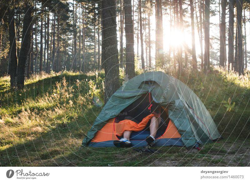Zelt im Wald am Sonnenlicht schön Erholung Freizeit & Hobby Ferien & Urlaub & Reisen Tourismus Ausflug Abenteuer Camping Sommer wandern Natur Landschaft Baum