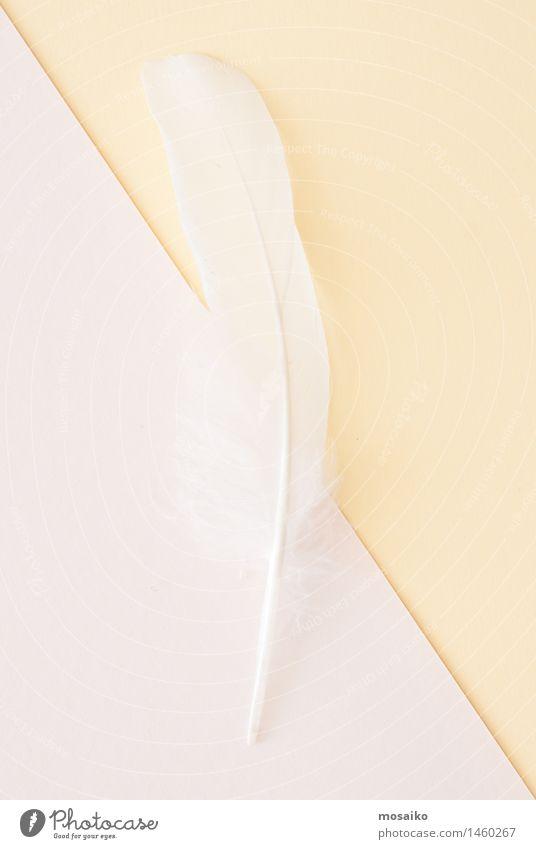 weiße Feder auf hellem Papierhintergrund Lifestyle elegant Stil Design Wellness Leben harmonisch Wohlgefühl Erholung ruhig Spa Massage Maler Schwan fliegen
