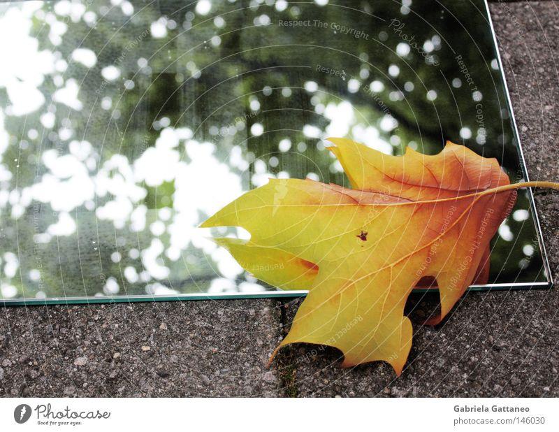 Wenn sich der Herbst im Spiegel betrachtet Baum grün rot Winter Blatt gelb grau gold Bodenbelag berühren Geäst Ahorn Rauschen