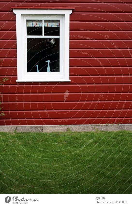 Schwedenschick 2008 Haus weiß rot rot-weiß Fenster Gras Rasen Holzbrett Holzhaus Fensterrahmen Dekoration & Verzierung Fensterdekoration Neubau Skandinavien
