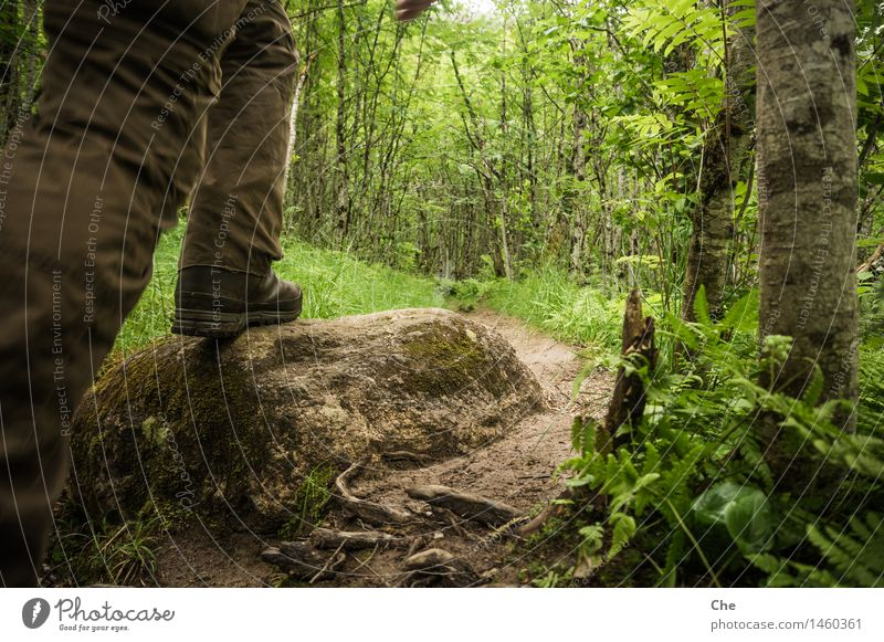 Per Fußbus unterwegs Natur Ferien & Urlaub & Reisen grün Baum Wald Stein gehen wandern geschlossen Abenteuer Fußweg Urelemente Ziel Barriere Urwald