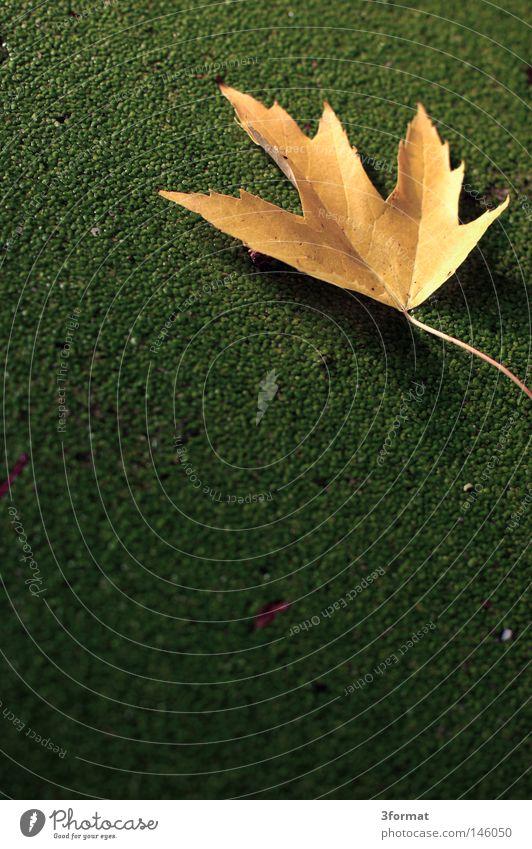Herbsttag Wasser grün Baum Pflanze Sommer Tier Farbe Blatt Einsamkeit ruhig Ferne gelb Wiese kalt Gras
