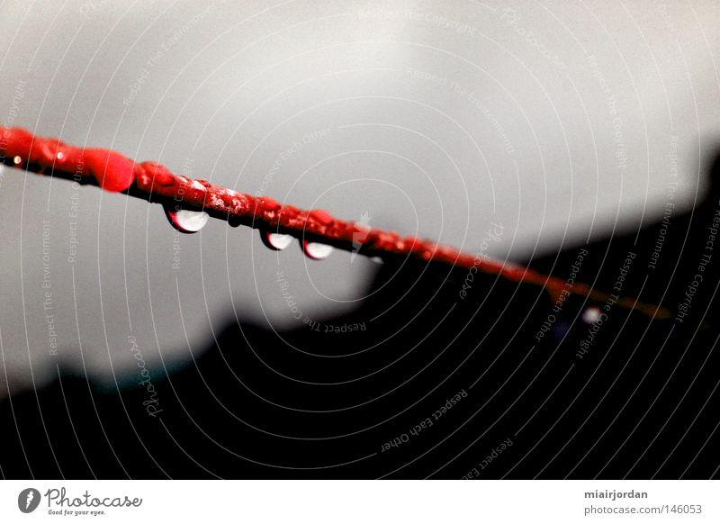 Heißer Draht Wasser rot schwarz Wolken grau Park Regen Wassertropfen Seil nah Dach obskur Tiefenschärfe Wäscheleine